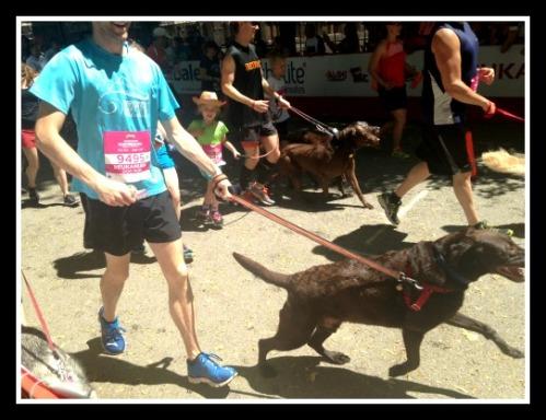 dog run3