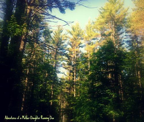 Trail Running through nature