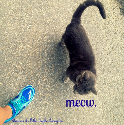 Friendly to runners cat.
